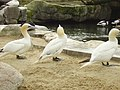 Zoo am Meer 2008 PD 55.JPG
