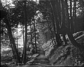 """""""A Devon Lane"""", Stanley Park, Vancouver, B.C. (14008757725).jpg"""