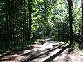 (PL) Polska - Warmia - Las Miejski w Olsztynie - The City Forest in Olsztyn (28.VIII.2012) - panoramio (42).jpg