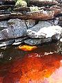 Água dos rios e cachoeiras da Chapada Diamantina.jpg