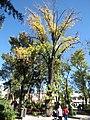 Árbol en el Jardín del Encino.jpg