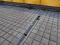 Černý Most, chodníková rampa od stanice Rajská zahrada, kanálek (02).jpg