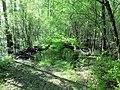 Ługi helenowskie wielki ług las 2.jpg