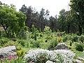 Ботанічний сад ДНУ 48.JPG