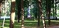 Братская могила советских воинов (вид с пр.Ленина).JPG