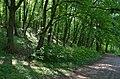 Верхнє озеро-ставок з Китаївського каскаду, вул. Китаївська, 15.jpg