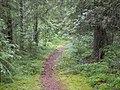 В лесу - panoramio.jpg