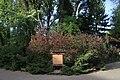 Дендрарій Київського зоопарку (масив дерев) IMG 3396.jpg