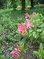 Донецкий ботанический сад 037.jpg