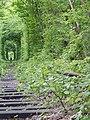 Клеванський парк, Рівненський район 2014.JPG