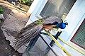 Московский зоопарк. Фото 33.jpg