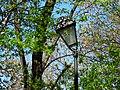 Міський парк IMG 8693.jpg