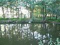 Озеро Рюмниково, заводь - panoramio.jpg