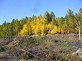 Осень - panoramio - Tanya Dedyukhina (1).jpg