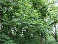 Парк шума Гази Баба во мај (173).JPG