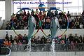 Прыжок дельфинов.jpg