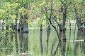 Разлив реки Волга весной.jpg