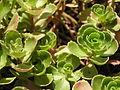 Растения в Седово 173.JPG