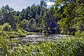 Река Ацвеж на границе Котельничского и Свечинского районов Кировской области.jpg