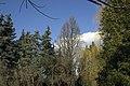 Сирецький дендрологічний парк 31.jpg