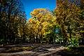 Сквер імені Тараса Шевченка. осінь 2017року.jpg