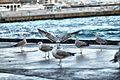 Чайки на набережной Ялты - panoramio.jpg