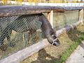 Якутский зоопарк 30.JPG