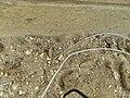 מלכודות נמלים.jpg