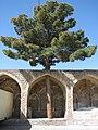 درختی که به احترامش سقف را کامل نساخته اند - panoramio.jpg