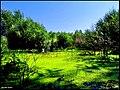 زیباییهای صوفی چای - panoramio.jpg