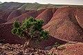 ⵉⴷⵓⵔⴰⵔⵏⵓⴰⵟⵍⴰⵙ, Morocco (45977170905).jpg