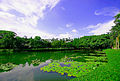 华南农业大学,美丽的洪泽湖c - panoramio.jpg