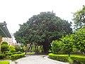 大南門城裡的老榕樹 - panoramio.jpg
