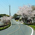 奈良県道15号 明日香村八釣にて 2012.4.12 - panoramio.jpg
