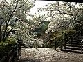 水軍城遊歩道(春) - panoramio.jpg