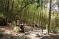 竹林 Bamboo Grove - panoramio (1).jpg