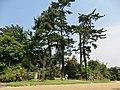 緑地 - panoramio.jpg