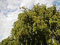 0516jfSaint John Bananas School Roads Sucol Calumpit Bulacanfvf 01.JPG