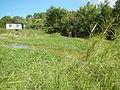 07810jfPampanga River banks Candelaria Welcome Calumpit Bulacan Roadsfvf 07.JPG