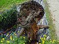 10 Monza Parco Cascina Frutteto fungo delle piante.jpg