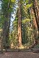 16 21 0081 redwood.jpg