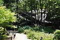 170811 Rokko Alpine Botanical Garden Kobe Japan07n.jpg