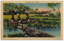 1900sc Postcard-Alligator 01.jpg
