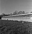 1960 Station Avicole au CNRZ-13-cliche Jean-Joseph Weber.jpg