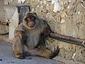 2005-07-23 Gibraltar has a Patrone.jpg
