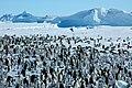 2007 Snow-Hill-Island Luyten-De-Hauwere-Emperor-Penguin-80.jpg