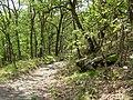 2008 0707 80880 Laubmischwald - Vinschger Sonnenberg R0670.jpg