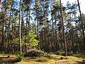 20120902Waldweide Reilinger Eck3.jpg