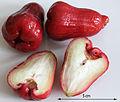2014-04-26 Syzygium samarangense 04 anagoria.JPG