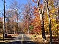 2014-11-02 13 49 55 View north along a wooded portion of Poor Farm Road during autumn in Hopewell Township, New Jersey.JPG